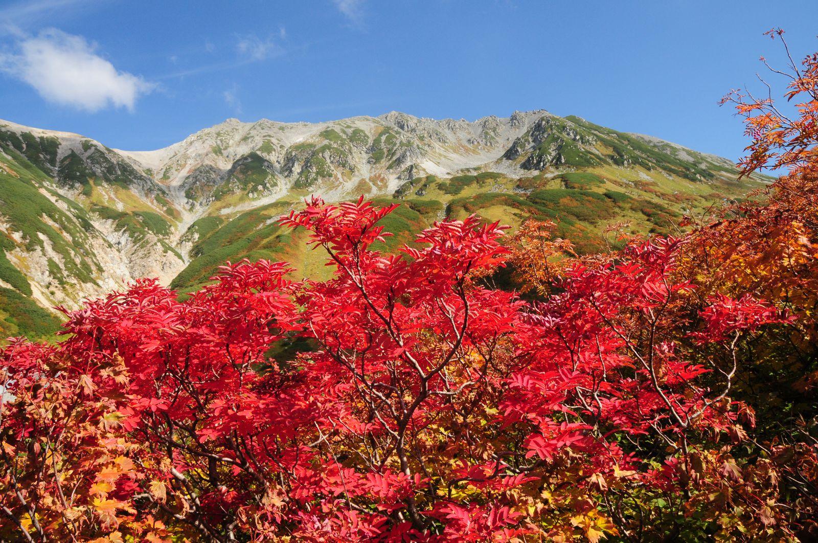 アルペンルートの秋は一気に訪れます。一番早いのは「室堂(むろどう)」の9月中旬、「美女平(びじょだいら)」は10月下旬から徐々に紅く染まっていきます。燃える木々と青空のコントラストは、どこを切り取っても美しいですよね!