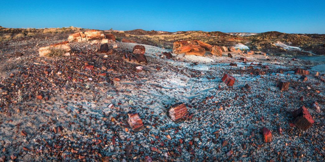 A smattering of petrified wood in the painted desert.