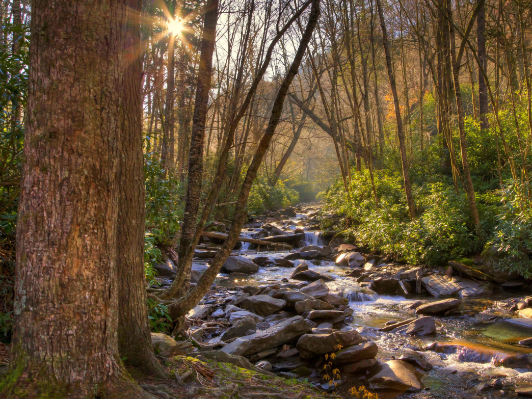 Fall In The Smokies Wallpaper 5 Knoxville Area Hikes That Are Perfect In The Spring