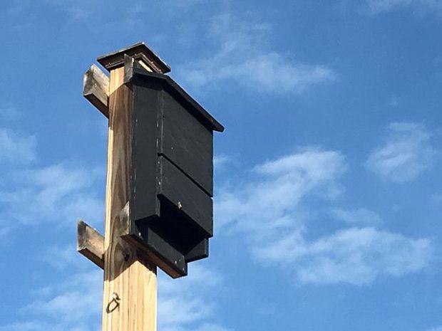 A bat house up on a pole.
