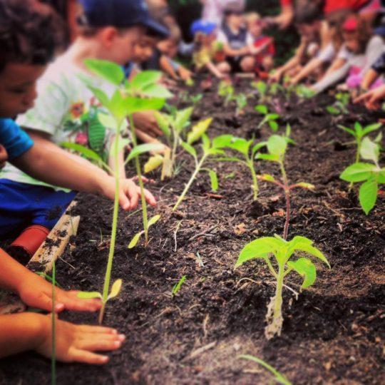 Children plant seedlings at Amber Waves Farm.
