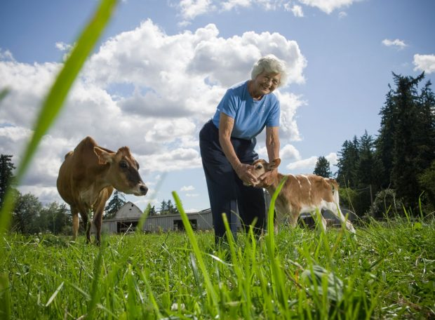 Grandmother farmer stands in the pasture and pets a calf while looking at the camera and smiling.