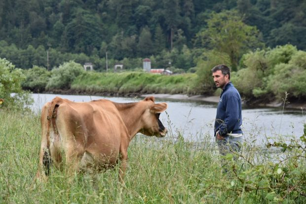 Pete Mahaffy stands in a pasture with a cow, and looks like he's talking to it.