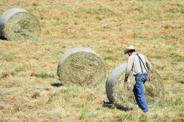 Garry Mahrt walks by two large round hay bales out in his field.