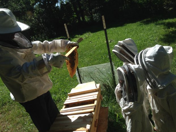 Cultiva Youth Project students learning how to check beehives.