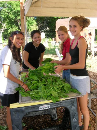 Cultiva Youth Project teens washing lettuce.