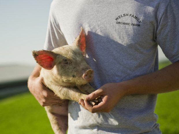 A farmer holds a piglet under one arm with its hooves cradled in the other hand.