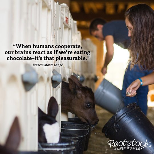 Image of farmers feeding calves with a quote from Frances Moore Lappe that says When humans cooperate, our brains react as if we're eating chocolate, it's that pleasurable.