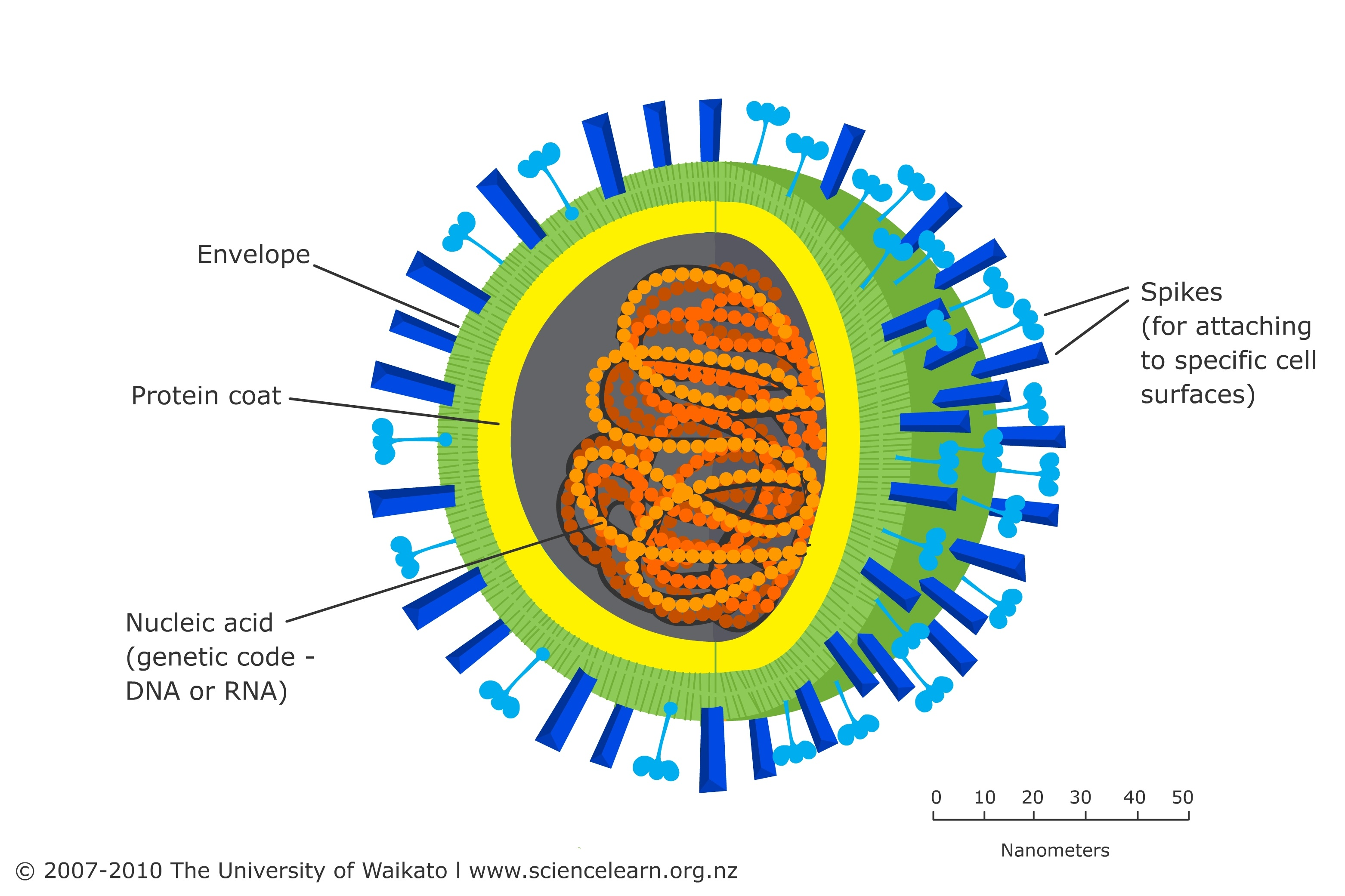 basic virus diagram state in software engineering science learning hub
