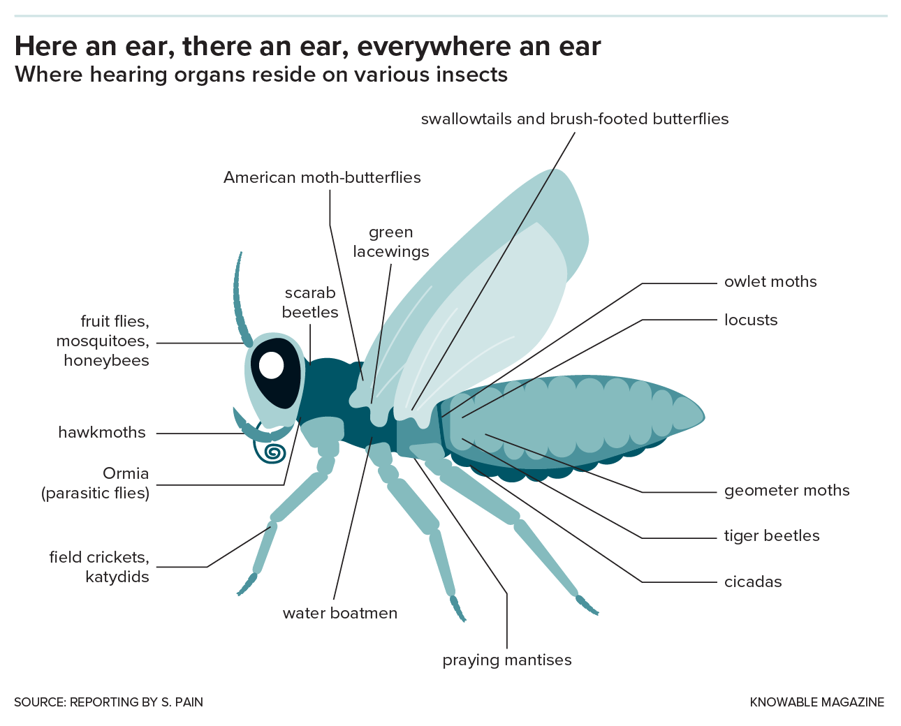 hight resolution of hearing has evolved at least 20 times in insects leading to ears in an astonishing number of different locations as shown on this image of a generalized