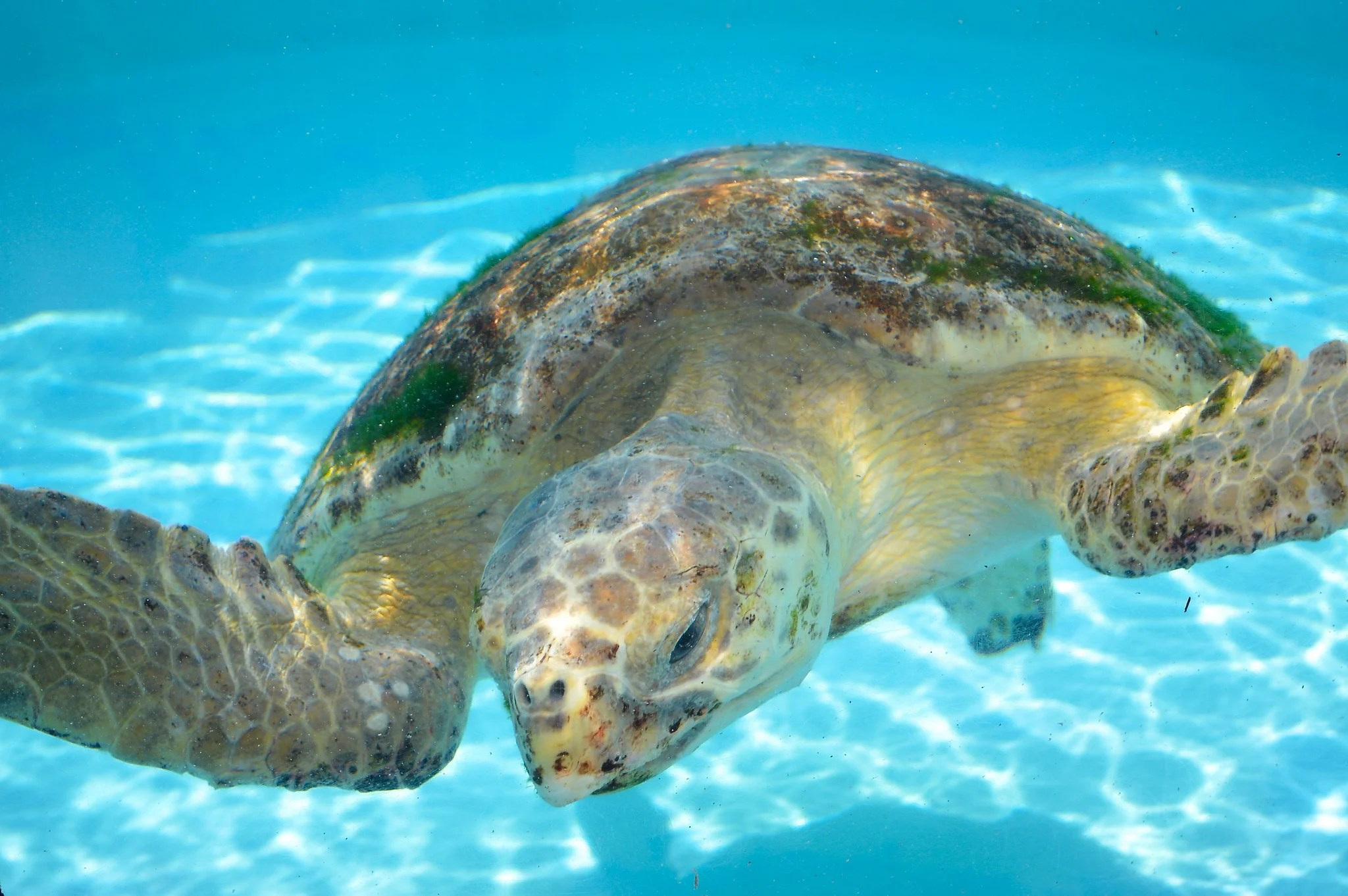 Essay About Turtles