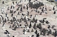 Cooped Up at Home? Help Scientists Spot Penguins from Space or Seek Out Galaxies