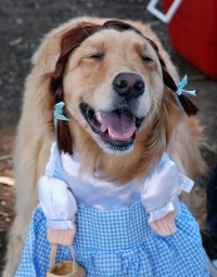 Halloween dog party is a howl