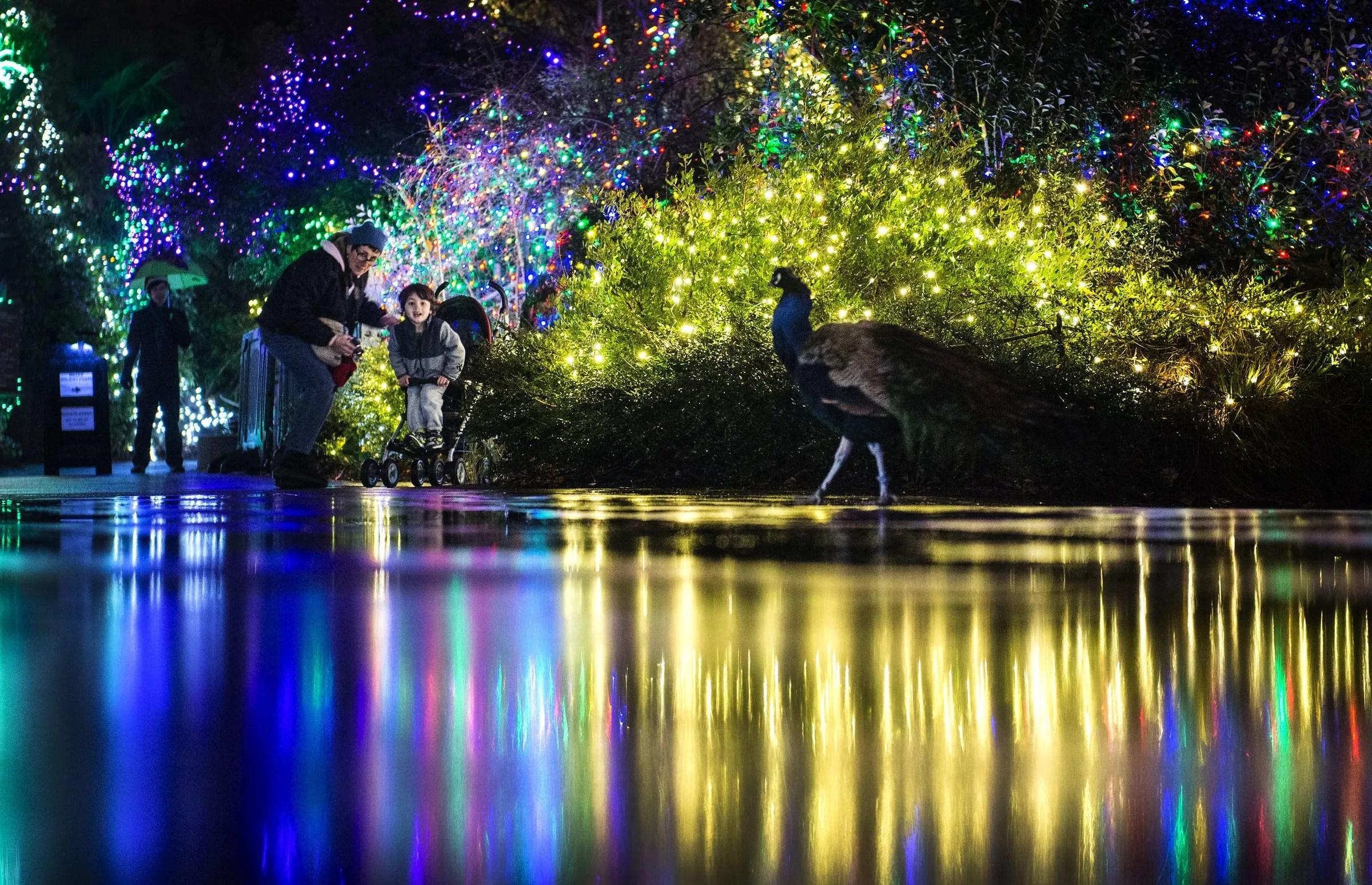 Lights Zoo Calgary