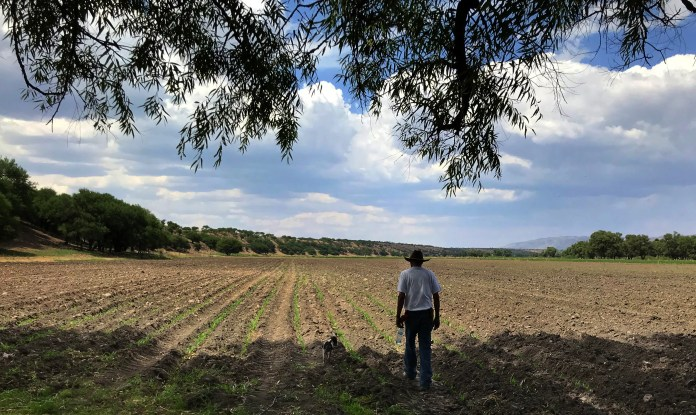 Rafael says he likes to watch corn grow on the land once owned by his grandfather. Normally concerned about violence and the family's future, he says he feels relaxed here.  (Nina Shapiro / The Seattle Times)