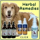 Herbal Remedies for Dogs and Cats