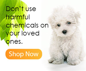 Discover the Best Dog Care Today!