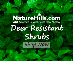 Shop Shrubs at Nature Hills