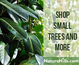 Shop Small Trees and More
