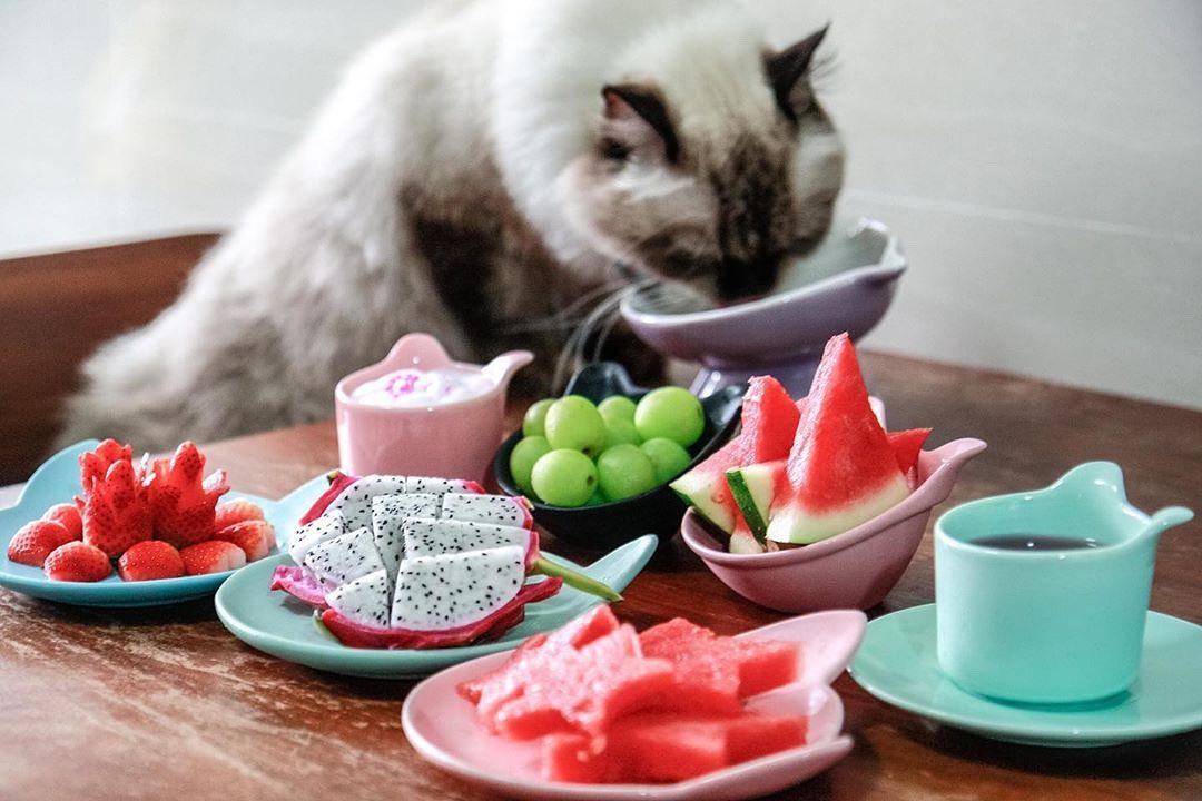 Kitty plate