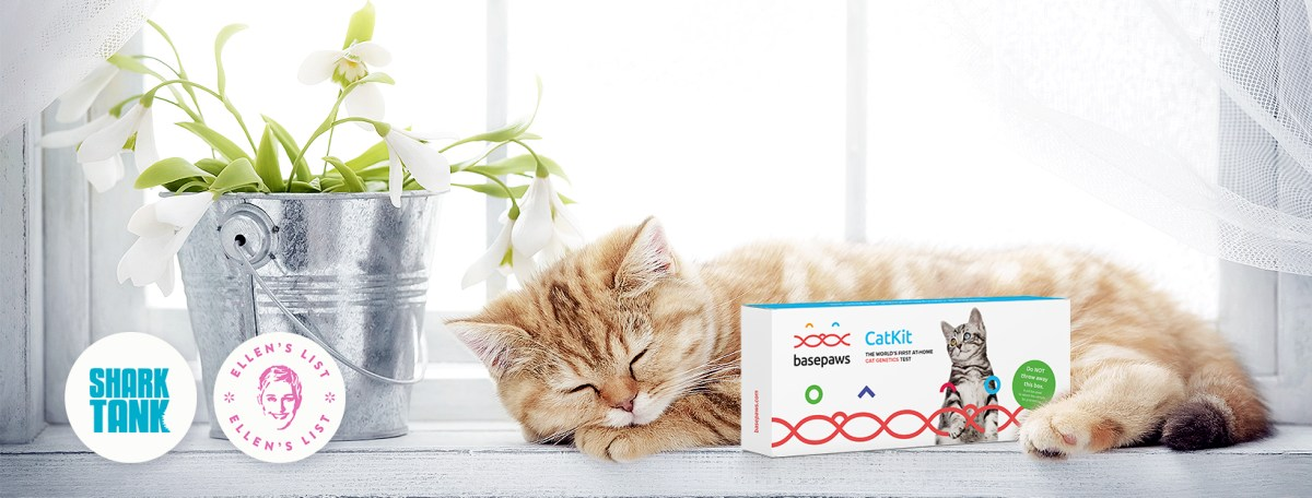 cat dna test