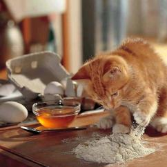 Cats In The Kitchen Restaurant Equipment Image Credit