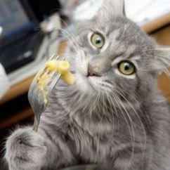 Cats In The Kitchen Menards Islands 猫在厨房里 图像信用