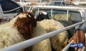 انخفاض أسعار الماشية بعد إنتهاء عيد الأضحي المبارك
