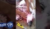 بالفيديو .. عمال مطعم يجهزون كلب للطهي بعد ذبحه