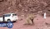 فيديو صادم لـ «شجرة» تنتقم من مواطن حاول اقتلاعها