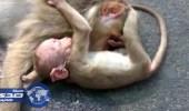 بالفيديو.. في مشهد مؤثر.. قرد صغير يحاول إيقاظ أمه بعد صدمها بالسيارة
