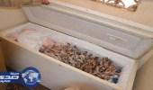 بالصور.. ضبط عمالة تدير منزلا شعبيا لتوزيع اللحوم المجهولة على المطاعم