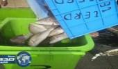 روائح كريهة تقود أمن طرق مكة لضبط شحنتي أسماك فاسدة «صور»