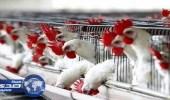 وزارة البيئة تحظر استيراد الطيور الحية من الولايات المتحدة الأمريكية