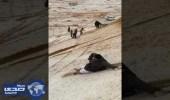 بالفيديو.. شباب القصيم يستمتعون بالتزحلق فوق جبال الثلج