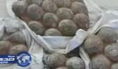 القبض على سارقي بيض الديناصورات المتحجرة بالصين