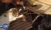 بالفيديو .. إماراتي يُسلم قطة حية للكلاب لتنهشها