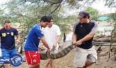 الفيضانات تتسبب في هروب تسعة تماسيح من حديقة حيوانات بيرو