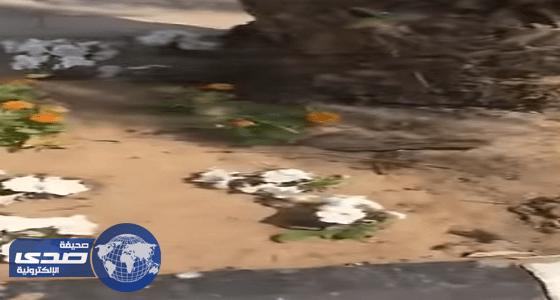 بالفيديو..رعب بجامعة الملك عبدالعزيز للبنات في جدة اثر انتشار الثعابين