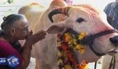 بالفيديو.. هندوسيون يعتدون بالضرب على مسلم لنقله أبقاراً للمذبح