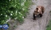 بالصور.. موعد غرامي لشاب وحبيبته بأخطر غابات موسكو