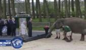 بالفيديو .. سعادة غامرة بين قطيع من الفيلة أطعمت إحداهم ملكة بريطانيا