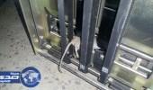 بالصور.. «فأر» يتلف آلاف الريالات من ماكينة صرف آلي