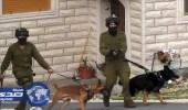 القوات الإسرائيلية تهاجم الأسرى المضربين عن الطعام بالكلاب البوليسية