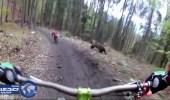 بالفيديو.. دٌب غاضب يٌهاجم راكب دراجة هوائية