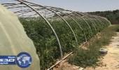 الزراعة تكشف عن آلية تعويض أضرار الكوارث الطبيعية بالمزارع