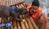 بالفيديو.. كلبان يٌساعدان صديقهما لإنقاذه من الغرق