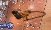 بالفيديو.. لص يسرق مجمع تجاري في الجبيل بـ«نبلة حديدية»