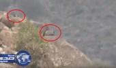 بالفيديو.. رصد أماكن اختباء وتمركز عناصر ميليشيات الحوثي