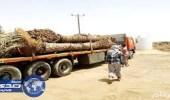 وزارة الزراعة تضبط 160فسيلة مخالفة لنظام الحجر الزراعي